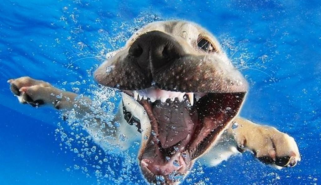 Imagenes graciosas de perros bajo el agua