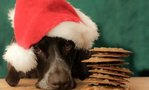 Perro con gorro de navidad y galletas