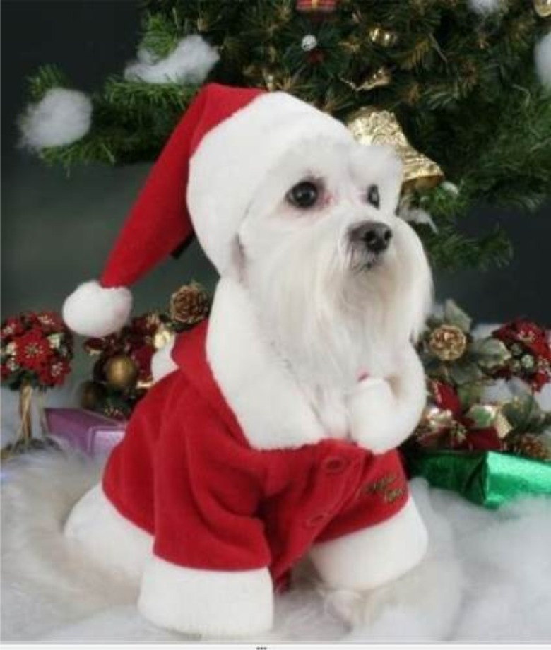 Perro disfrazado de Santa Clause