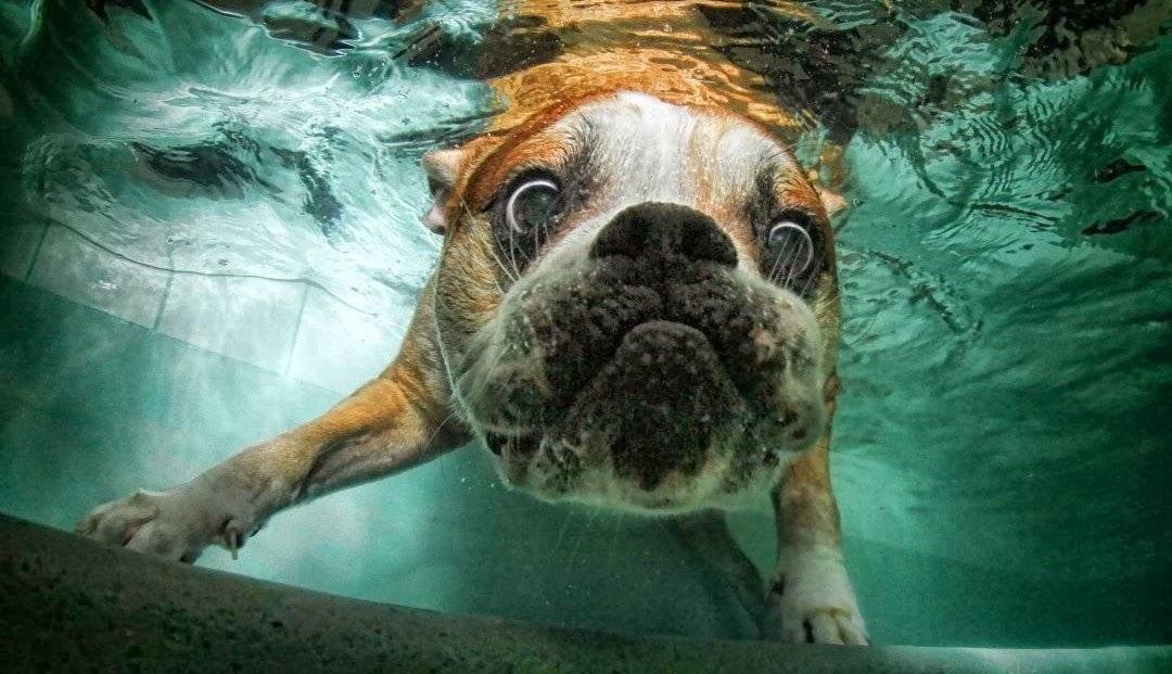 foto dentro del agua de perros nadando