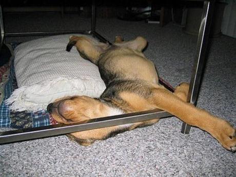 fotos de perros durmiendo en posiciones chistosas