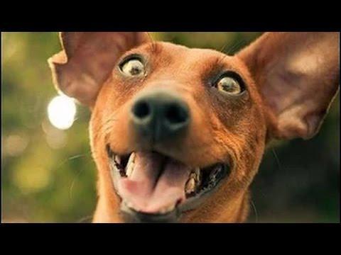 fotos divertidas de perros