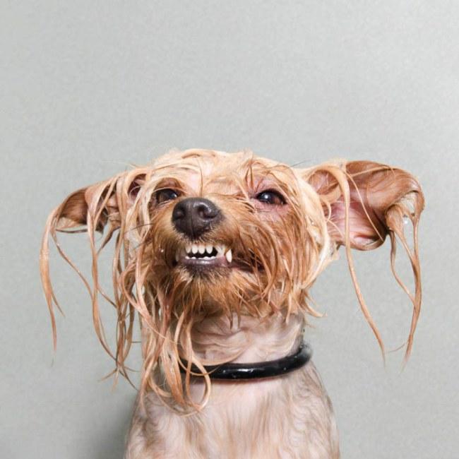 imagen perro mojado