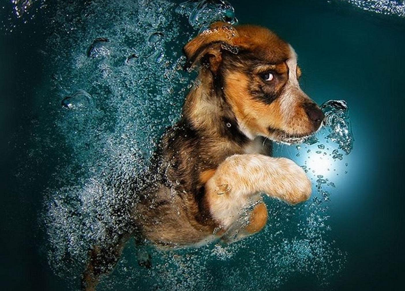 perros bajo el agua
