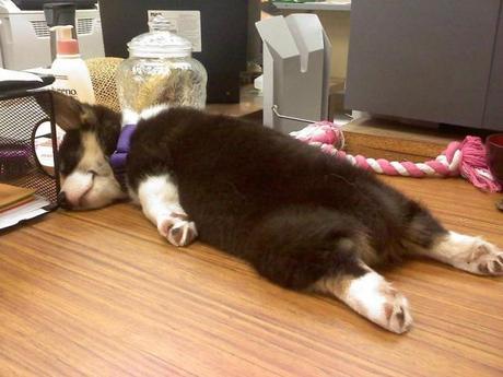 postura divertida de un perros durmiendo