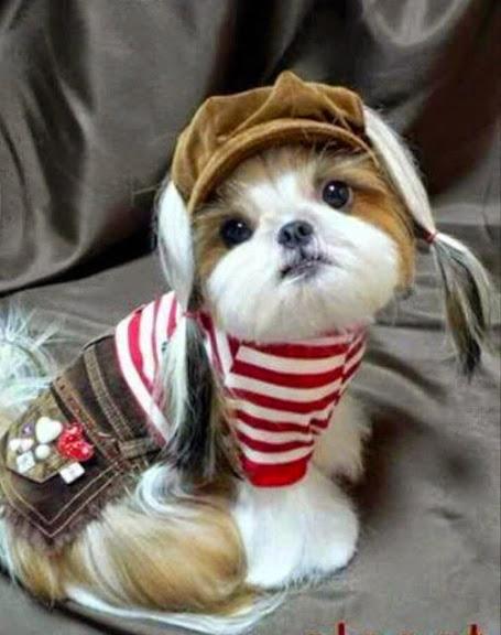 Adorables Imagenes De Perros Vestidos A La Moda