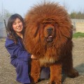 Bonitas Imagenes De Perros Gigantes Para El Facebook