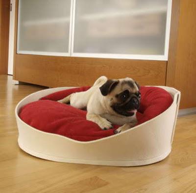Cama bonita para perro