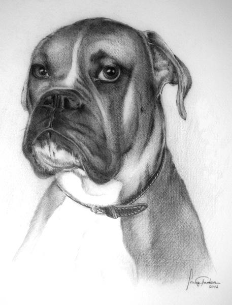 Dibujo de un perro boxer a lapiz
