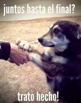 El amor de un perro es hasta el final