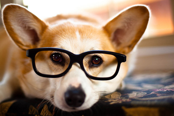 Foto bonita de perro con gafas