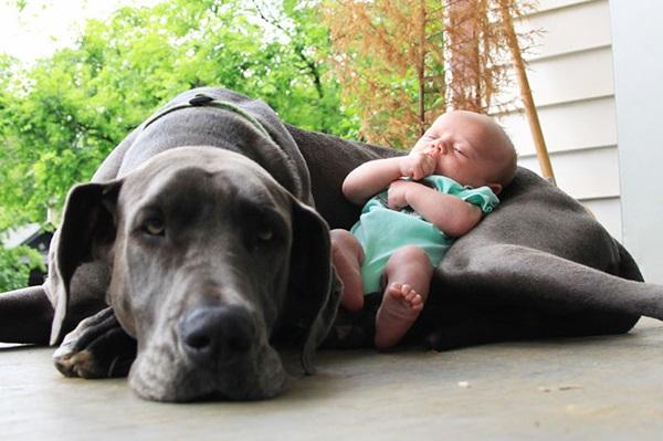 Foto de perro enorme con un bebe