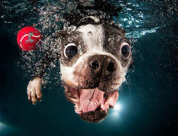 Foto de un perro dentro del agua cogiendo una pelota