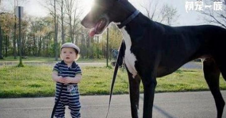 Fotos de grandes perros