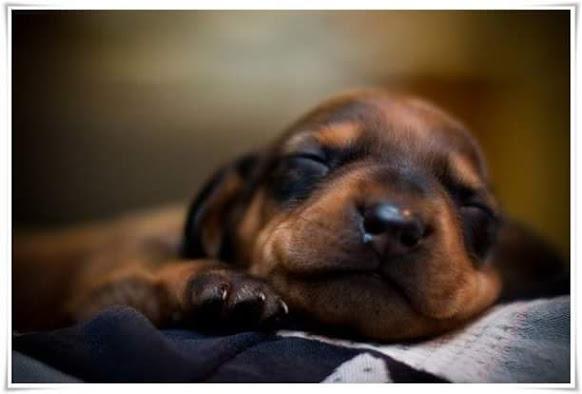 Fotos de perritos durmiendo
