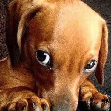 Fotos de perritos tristones