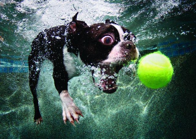 Fotos de perro atrapando pelota en el agua