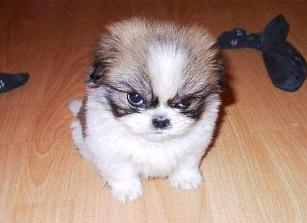 Fotos de perros con caras de enojados