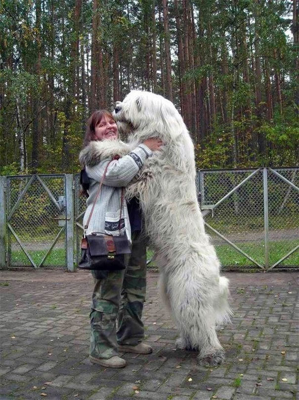 Fotos de perros enormes