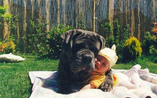 Fotos de perros gigantes junto a un bebe