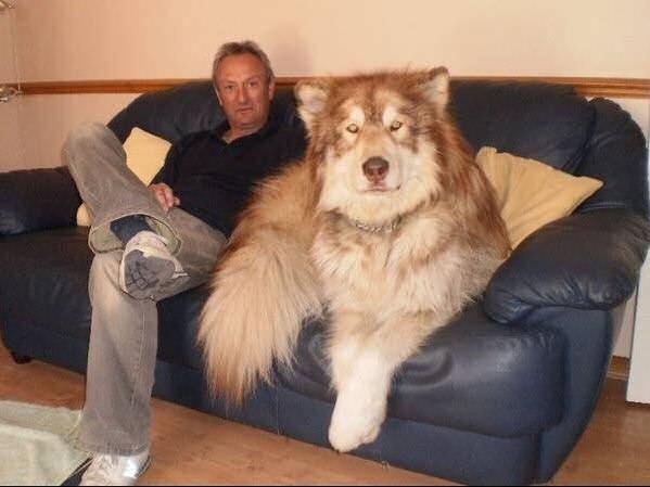 Fotos de perros muy grandes
