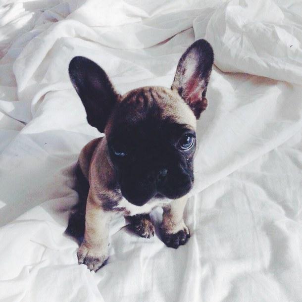 Fotos de perros pequeños y lindos