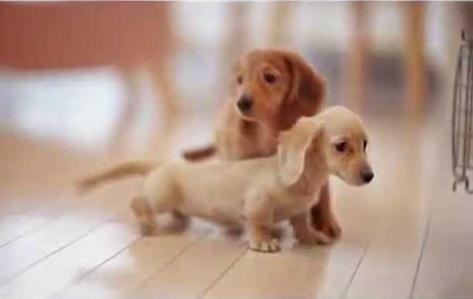 Fotos de perros super pequeños