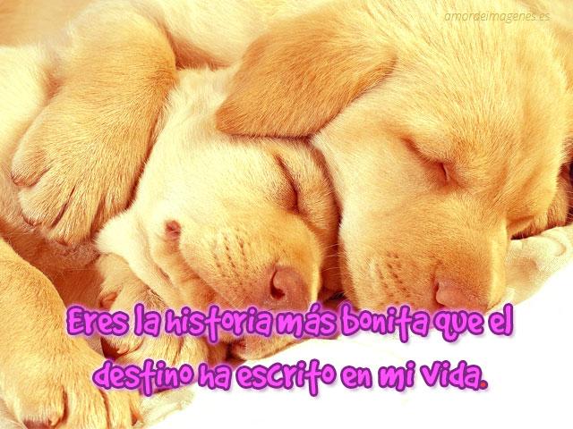 Frases de amor en imagenes de perros