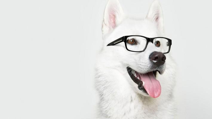 Imagen de un perro blanco con gafas