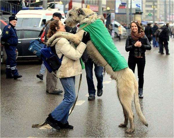 Imagen de un perro enorme con su dueña