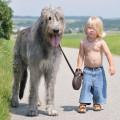 Fotos De Perros Grandes Con Niños
