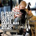 Imagenes Bonitas Con Frases Sobre El Amor De Los Perros