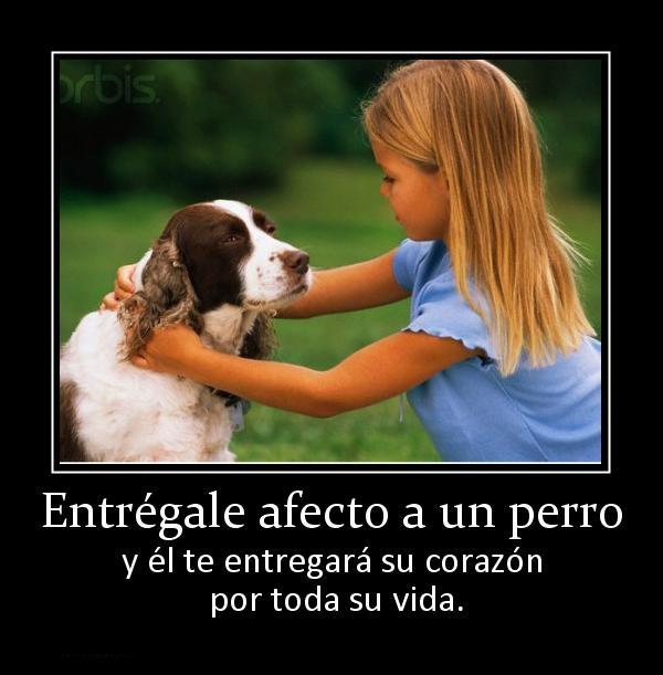 Imagenes Con Frases Sobre Entregarle amor a un Perro
