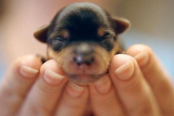 Imagenes De Perritos Recien Nacidos Durmiendo