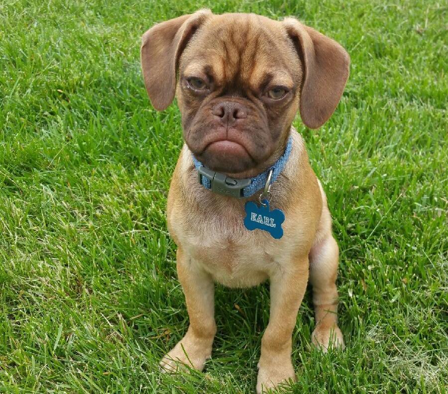 Imagenes De Perros Con Caras De Enojados