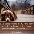 Imagenes De Perros Con Frases Para Reflexionar Sobre Los Errores