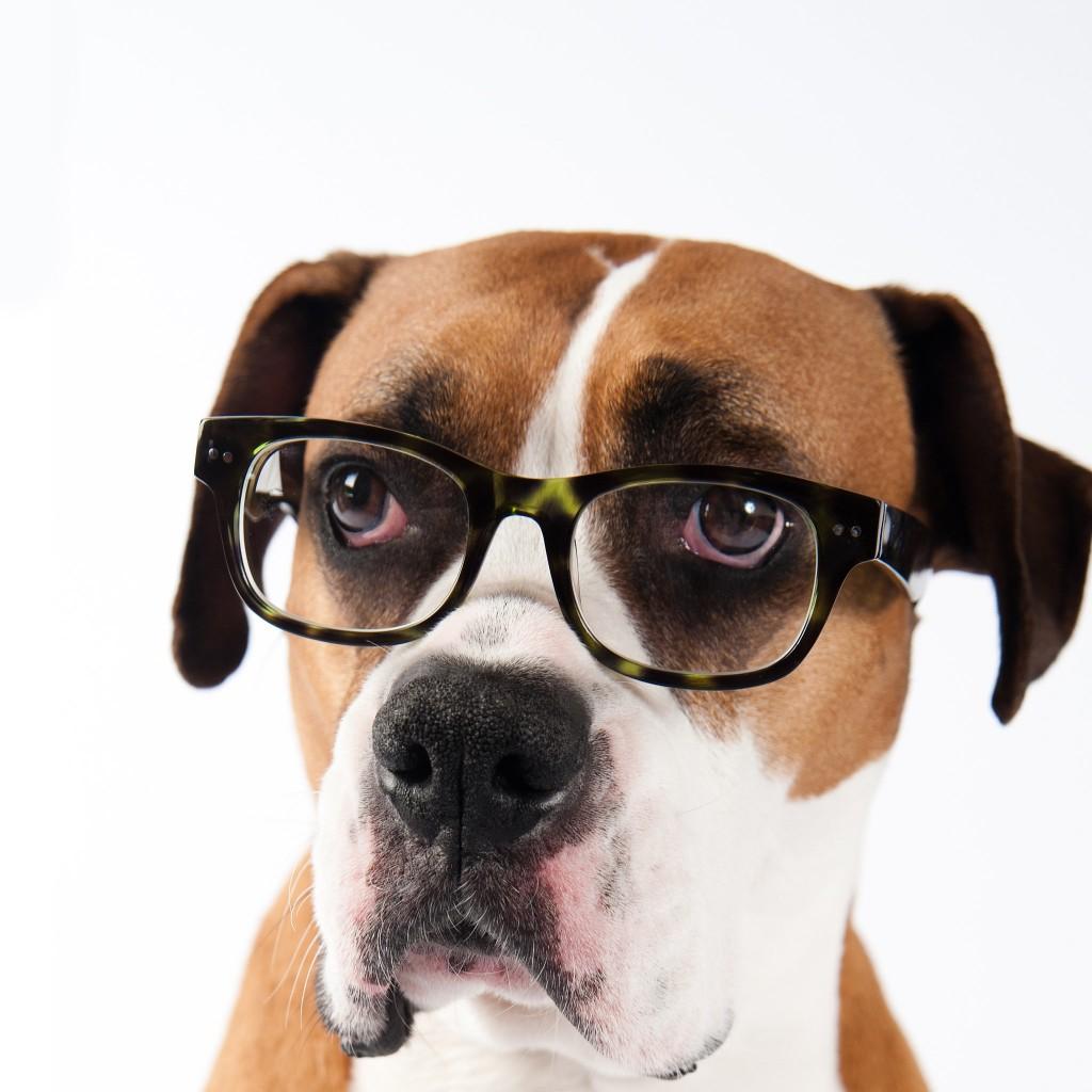 Imagenes De Perros Elegantes E Intelectuales Usando Gafas