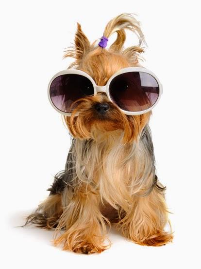 Imagenes de Perros Adorables Usando Gafas De Sol