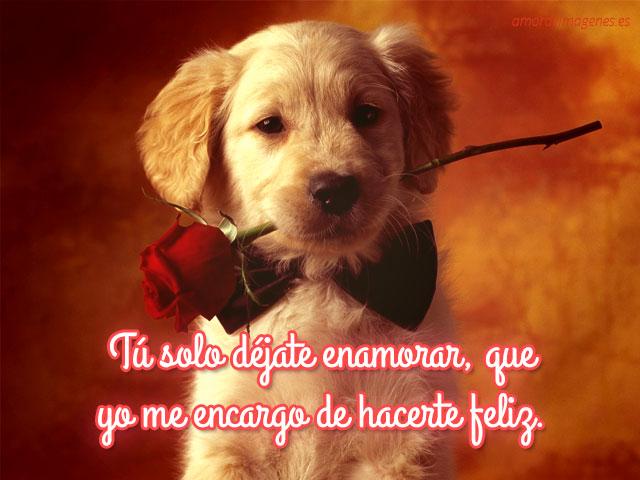 Imagenes de Perros con mensajes de amor