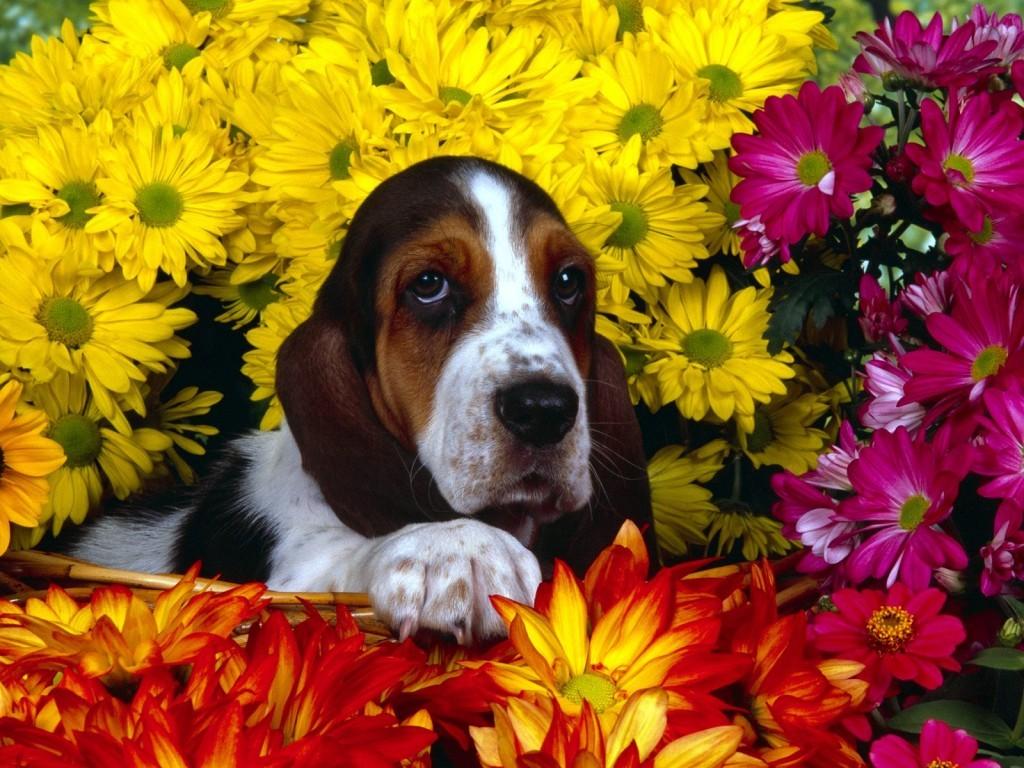 Imagenes de fondo de pantalla de perros con flores