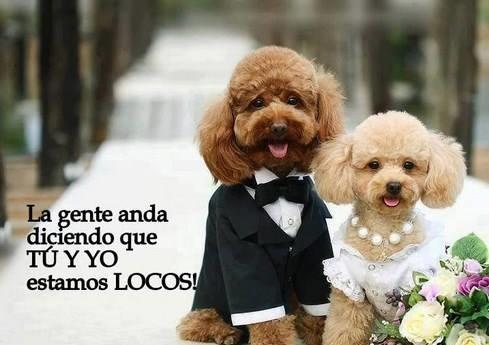 Imagenes de perritos con frases chistosas