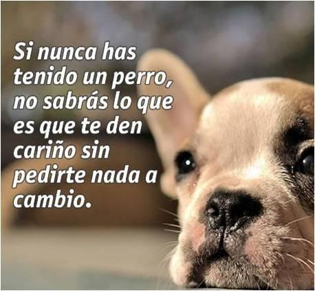 Imagenes de perritos con mensajes