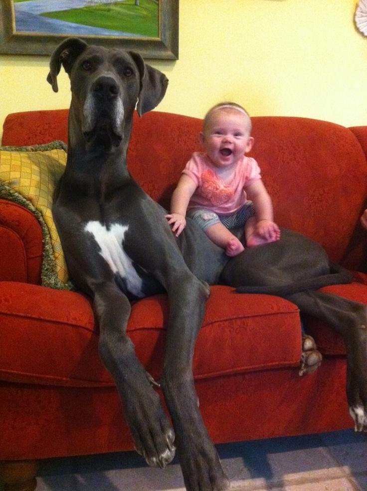 Imagenes de perros Gigantes con Bebes