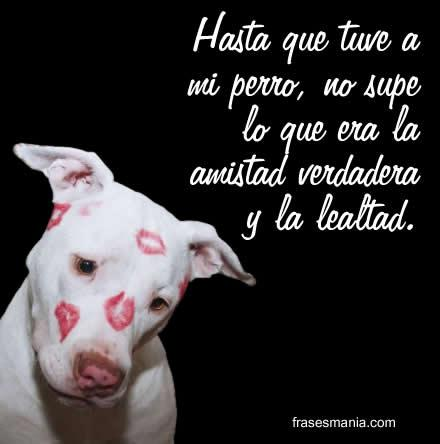 Imagenes de perros con mensajes sobre su lealtad y amor