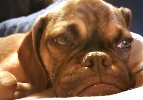 Imagenes de perros enojados