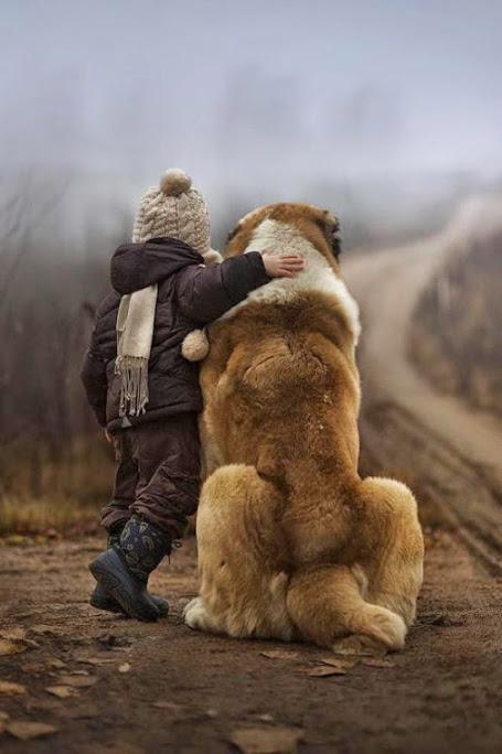 Imagenes de perros grandes con niños