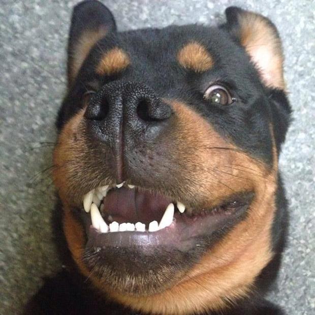 Imagenes de selfies de perros