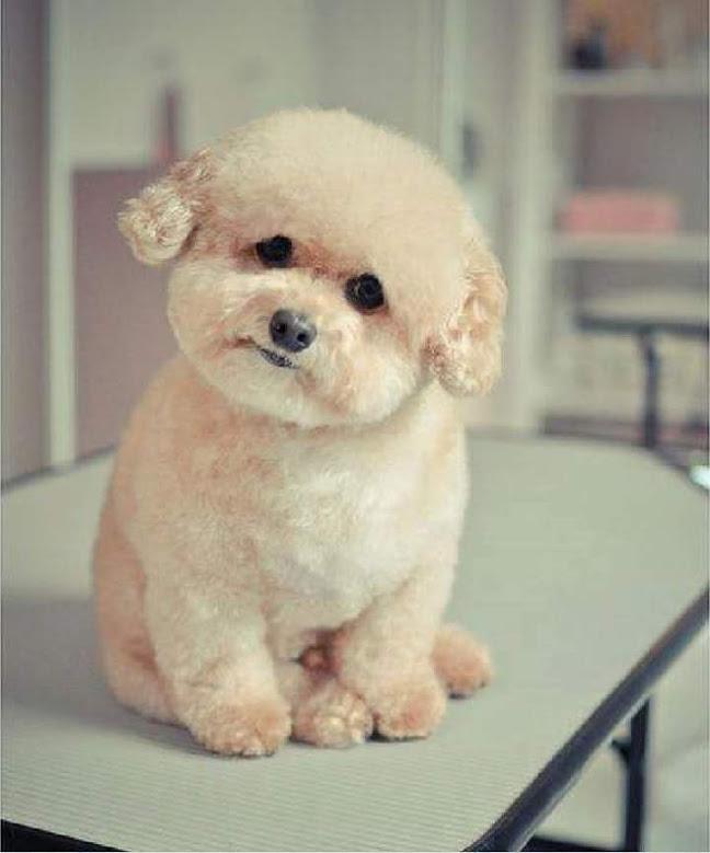 Lindo y tierno perrito miniatura