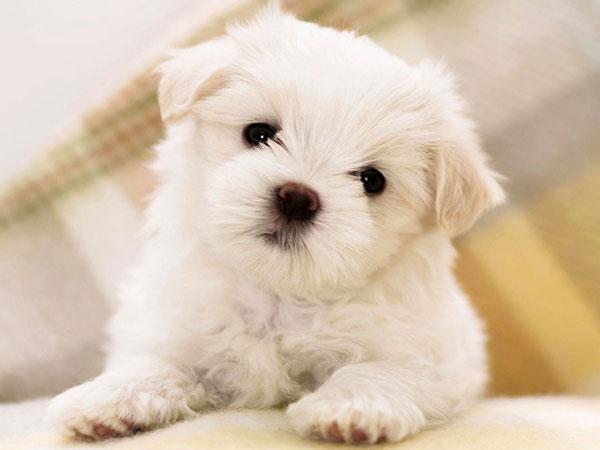 Mejores fotos de perros pequeñitos