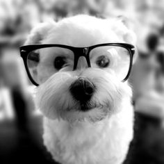 Perrito con gafas foto a blanco y negro